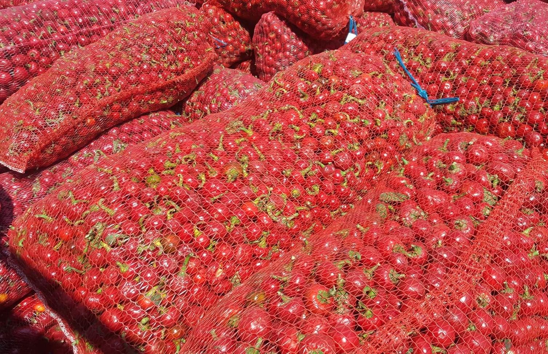 8. Harvest bags